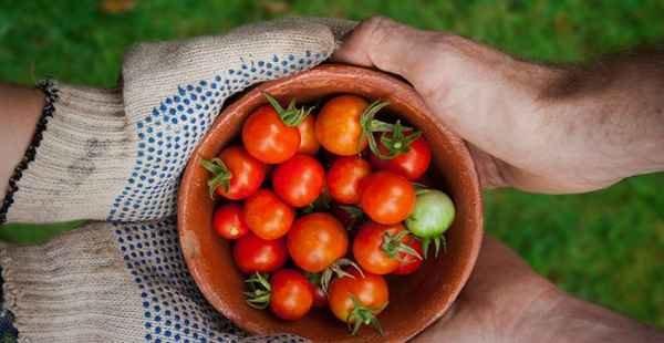 CAE aprova seguro-desemprego para agricultor familiar em caso de calamidades