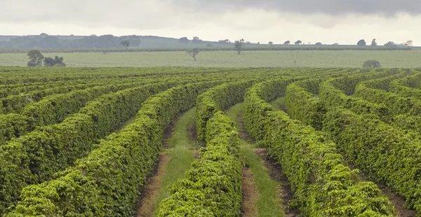 RCB altera normas do Imposto sobre a Propriedade Territorial Rural